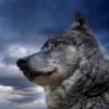 Расписание - последнее сообщение от Wolf